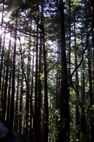 [Muir Woods]