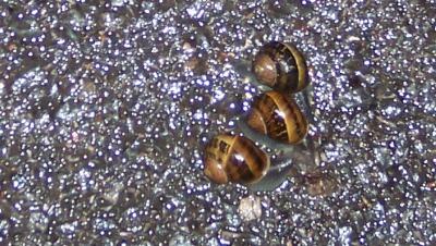 [Snail Race]